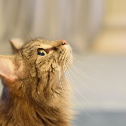 Isco the thinking cat